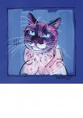 Siamese cat, painted sketch on thick coloured art paper